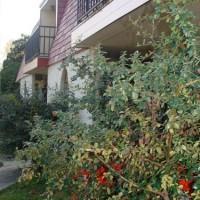WCR-buildingbush375